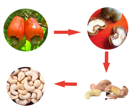 expensive cashew nut